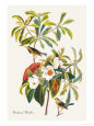 Bachman's Warbler Premium Poster by John James Audubon