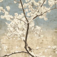 Cherry Blossoms I Art Print by John Seba