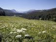 Cow Parsnip and Alpine Sunflower with Crested Butte in Distance, Washington Gulch, Colorado, USA Photographie par James Hager