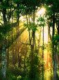 Solstråler gennem træerne Fotografisk tryk