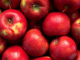 Red Rome Beauty Apples Fotografiskt tryck av Inga Spence