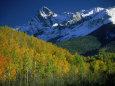 Aspen Trees, San Juan Mts, Colorado Fotografisk tryk af David Carriere