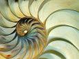 Close-up of Nautilus Shell Spirals Fotografisk tryk af Ellen Kamp