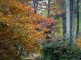Japanese Maple Trees Fotografisk tryk af Darlyne A. Murawski