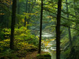Vodopád Texas Falls, Vermont, USA Fotografická reprodukce od Joe Restuccia III