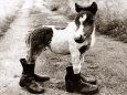 Adult Horse with Giant Boots Fotografik Baskı