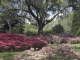 Orton Plantation Gardens, North Carolina, USA Photographie
