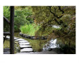 Japanese Garden Stone Path Fotografie-Druck von William Luo