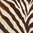 Contemporary Zebra III Art Print by Patricia Quintero-Pinto