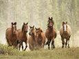Heste (fotografi) Posters