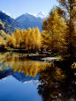 Fall Colors Reflected in Mountain Lake, Telluride, Colorado, USA Fotografisk tryk af Cindy Miller Hopkins