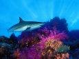 Mercan (Fotoğraflar) Posters