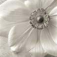 Floral Close-Up (B&W Photography) Posters