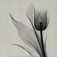 Floral (B&W Photography) Posters