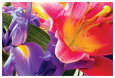Pink Flower Blossom (Color Photography) Posters