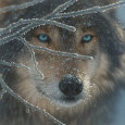 Wolf (Decorative Art) Posters