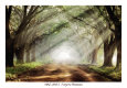 Evergreen Plantation Art Print by Mike Jones