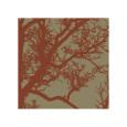 Cinnamon Tree IV Giclée-tryk af Erin Clark