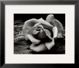 rose and driftwood ansel adams