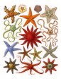 Starfish (Decorative Art) Posters