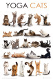 Chats Posters