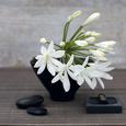 Hvide blomster Posters