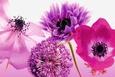 Nærbilleder af blomster (farvefotografi) Posters
