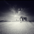 Animals (B&W Photography) Posters