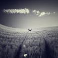 Mulane Fotografisk tryk af Luis Beltran