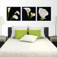 Calla Lilies Posters