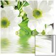 Hvid marguerit Kunst på glas