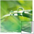 Pure Nature Kunst på glas