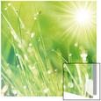 Lush Morning Grass Kunst på glas