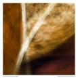 Manly Abstract IV Kunsttryk af Jean-François Dupuis