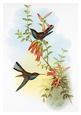 John Gould Posters