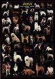Psi Plakát od Lia Stein