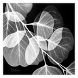 Leaves (B&W Photography) Posters