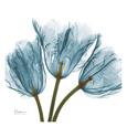 Tulips in Blue Kunsttryk af Albert Koetsier