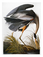 John James Audubon Posters