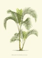 Coastal Palm IV Impressão artística