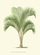 Coastal Palm I Impressão artística