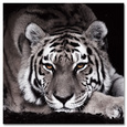 Tigra Negra Kunst på glas af Günter Lenz