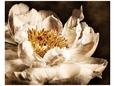 Blomster i flor (fotografi) Posters