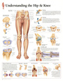 Understanding the Hip and Knee Anatomy Print Poster Plakat