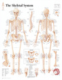 The Skeletal System Chart Poster Poster
