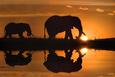 Jim Zuckerman African Silhouette Elephants Art Print Poster Plakat