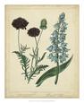 Cottage Florals VI Giclée-tryk af Sydenham Teast Edwards