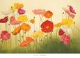 Sunlit Poppies Kunsttryk af Janelle Kroner