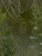 Spiders (Color Photography) Posters