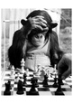 Chimpanzees (B&W Photography) Posters